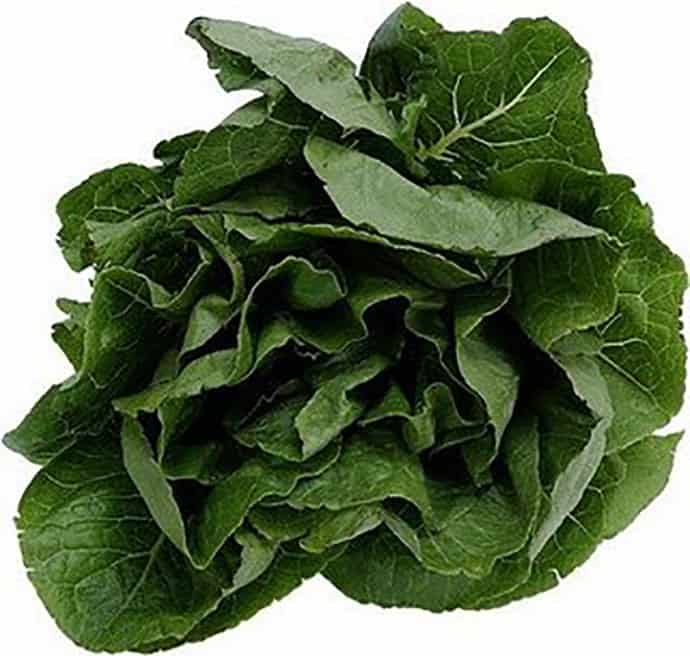 Going Green ... Deliciously: Top 10 Leafy Greens | 31Daily.com