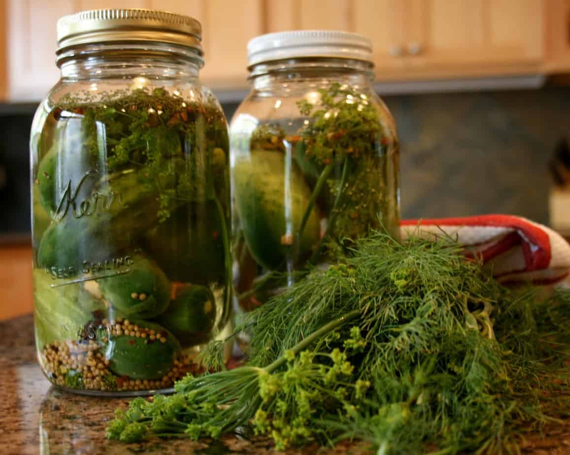 Refrigerator Spiced Dill Pickles Recipe | 31Daily.com