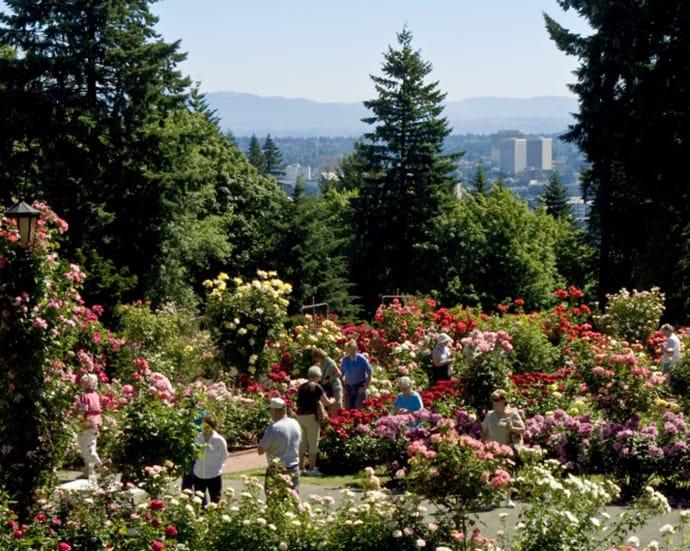 Portland Rose Gardens: Portland, OR