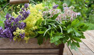 Medicinal Herb Gardens Series | 31Daily.com