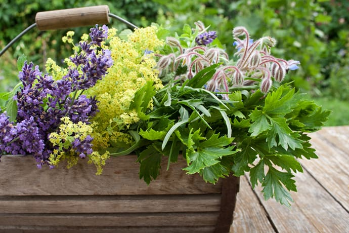 Medicinal Herb Gardens Series