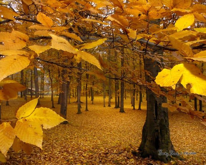 November: A Month Set Aside | 31Daily.com