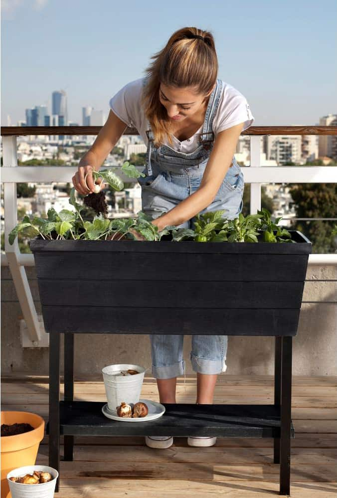Elevated Vegetable Garden