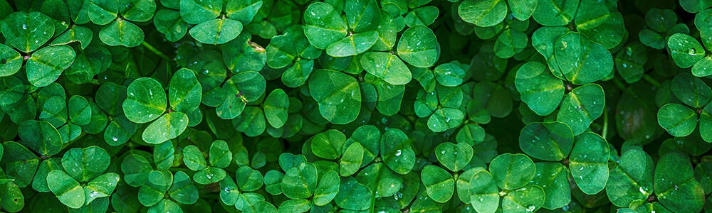 St Patrick's Day Holiday Posts | 31Daily.com