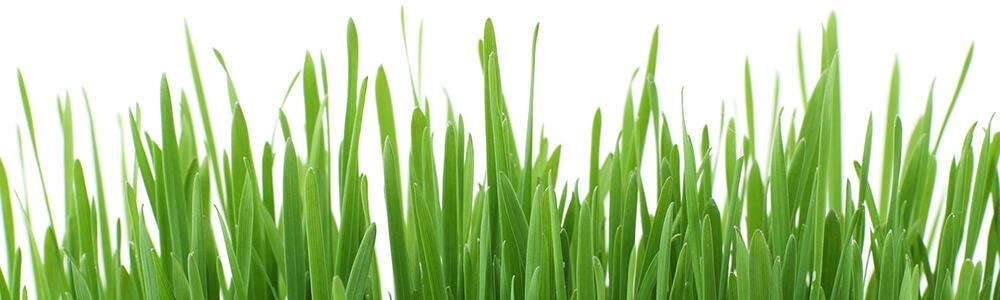 Spring Fresh Recipes, Ideas, Entertaining Tips and More | 31Daily.com