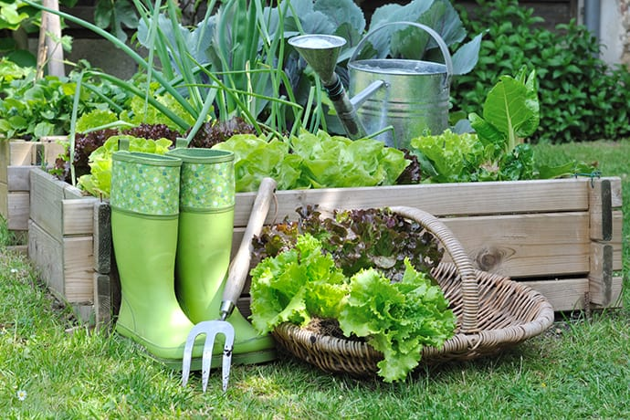 How to Start a Kitchen Garden for Beginners | 31Daily.com