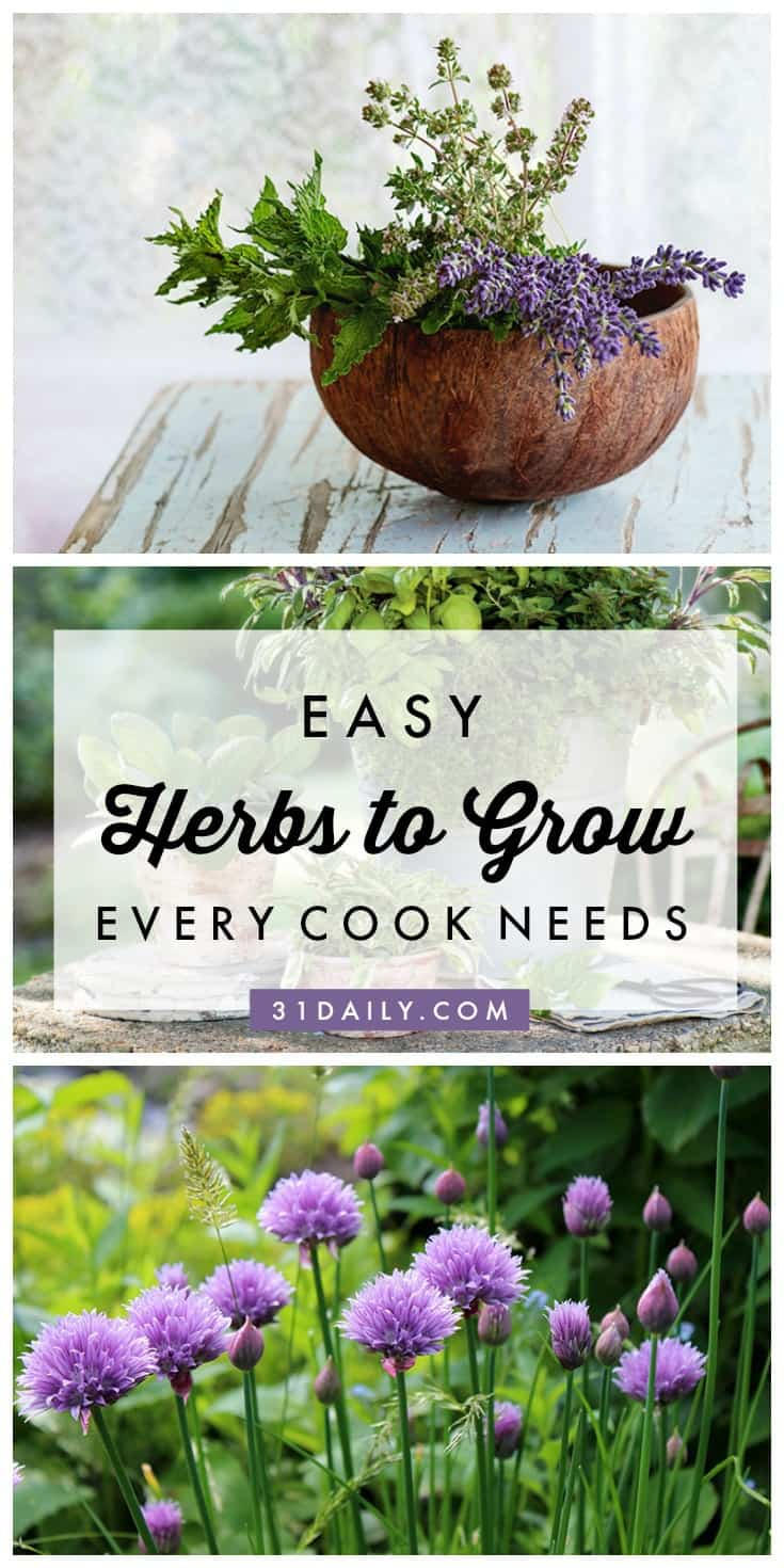 Easy Herbs to Grow that Every Cook Needs | 31Daily.com