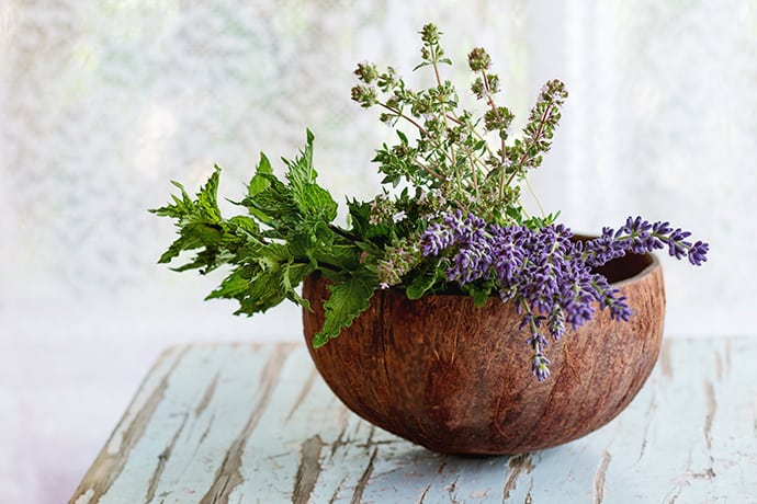 Easy Herbs to Grow that Every Cook Needs