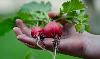 14 Quick Growing Vegetables for Your Spring Garden