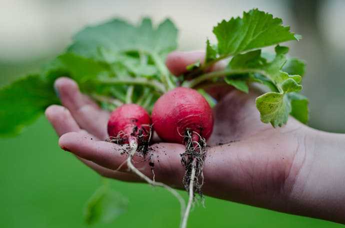 14 Quick Growing Vegetables for Your Spring Garden | 31Daily.com