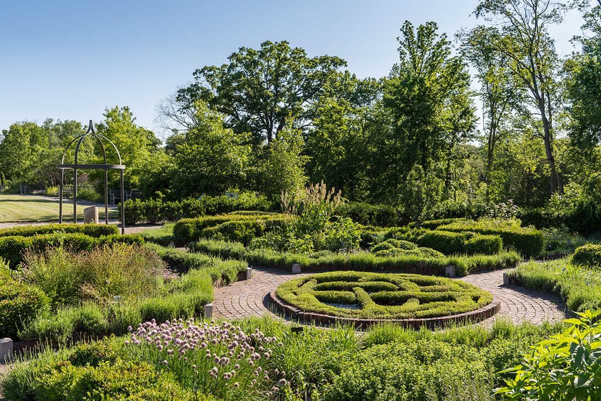 Medicinal Herb Gardens Series - 31 Daily