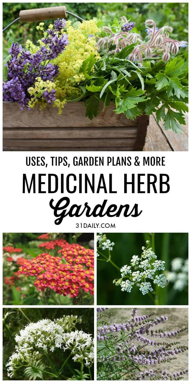 Medicinal Herb Gardens | 31Daily.com