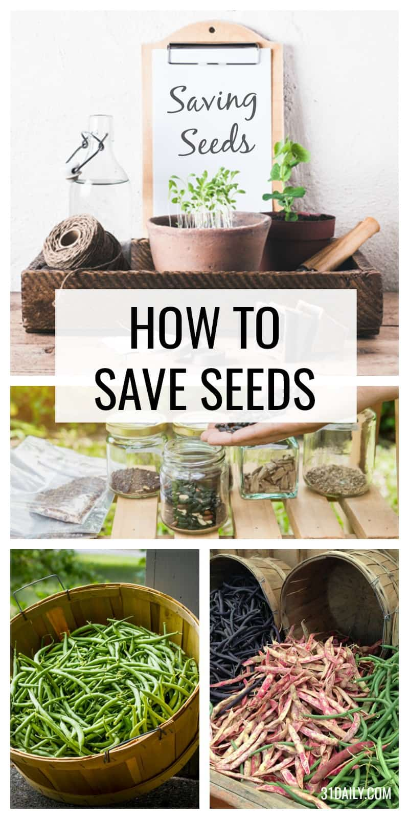 Saving Seeds from Your Garden | 31Daily.com