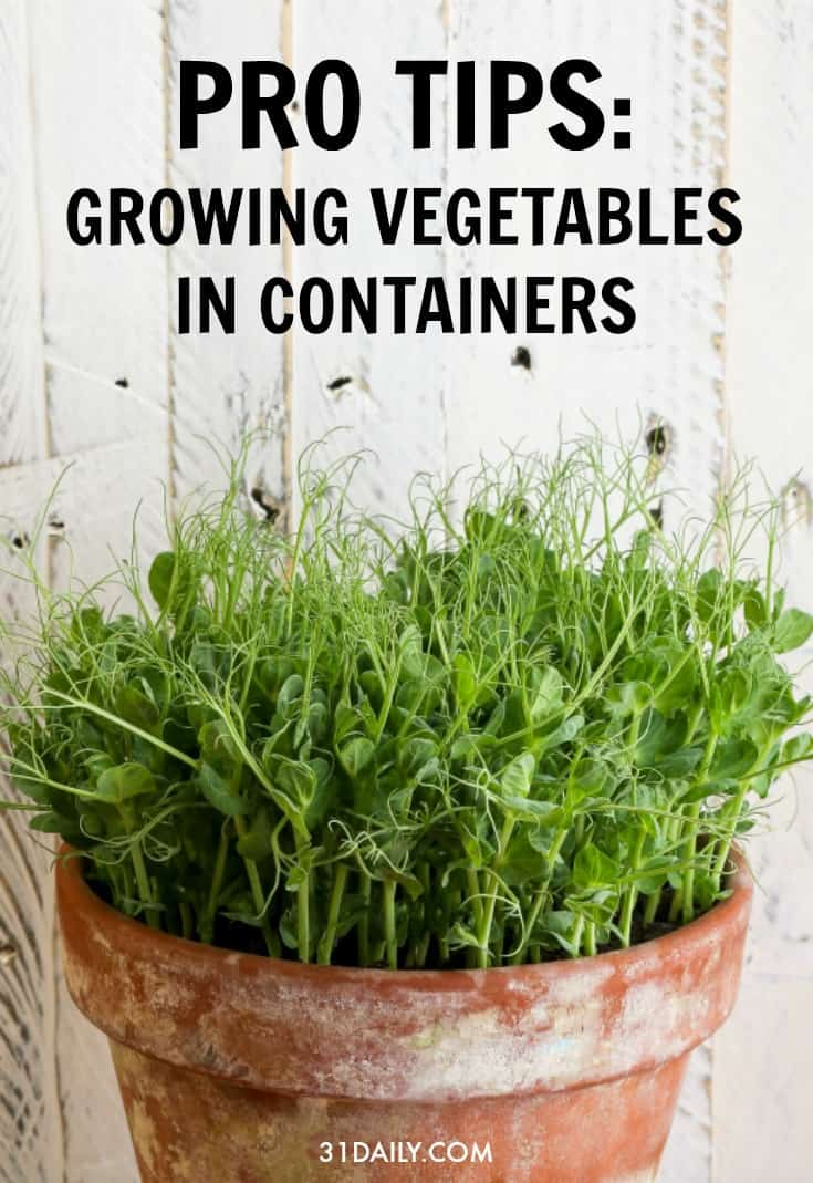 Pro Tips for Growing Vegetables in a Container Garden | 31Daily.com