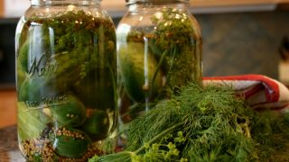 Refrigerator Spiced Dill Pickles