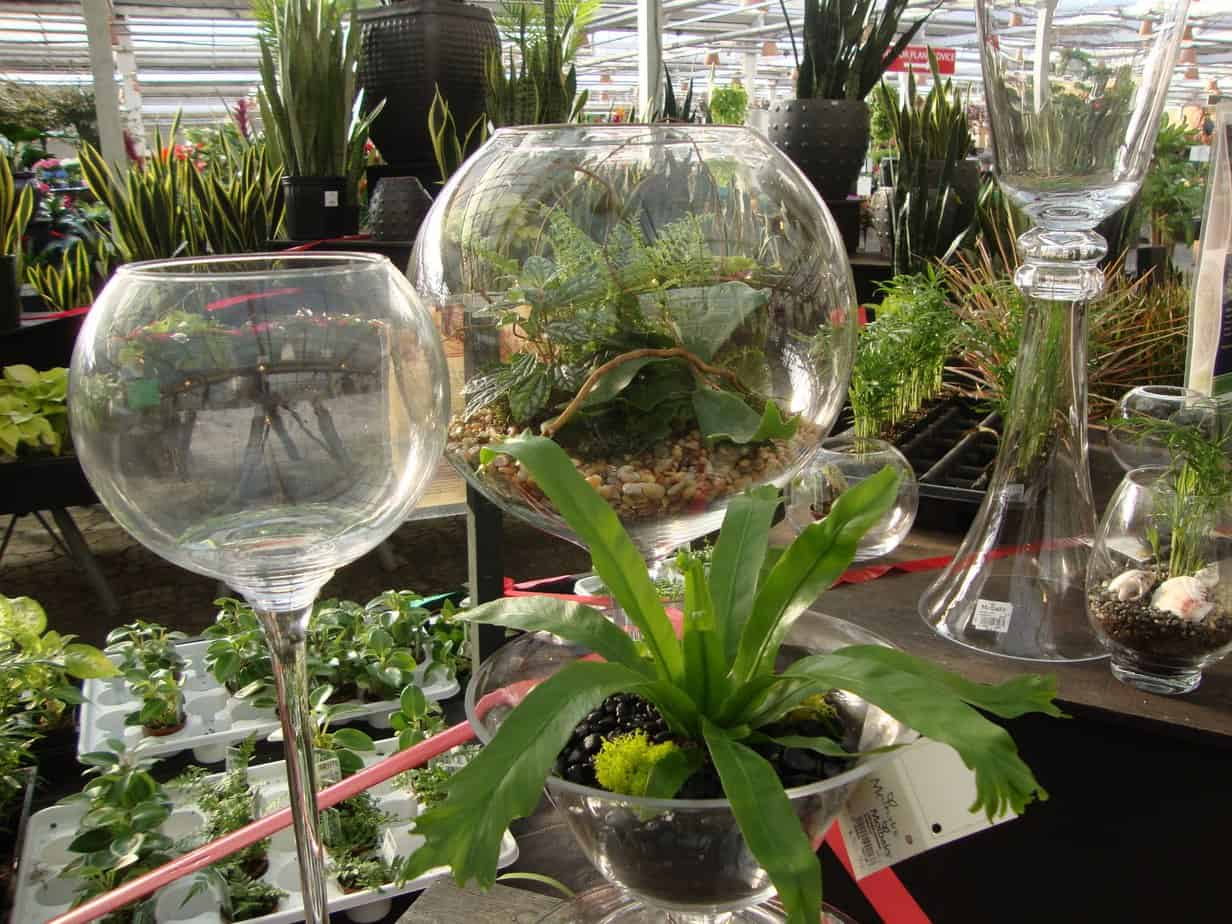Raised Glass Winter Terrariums at Molbaks