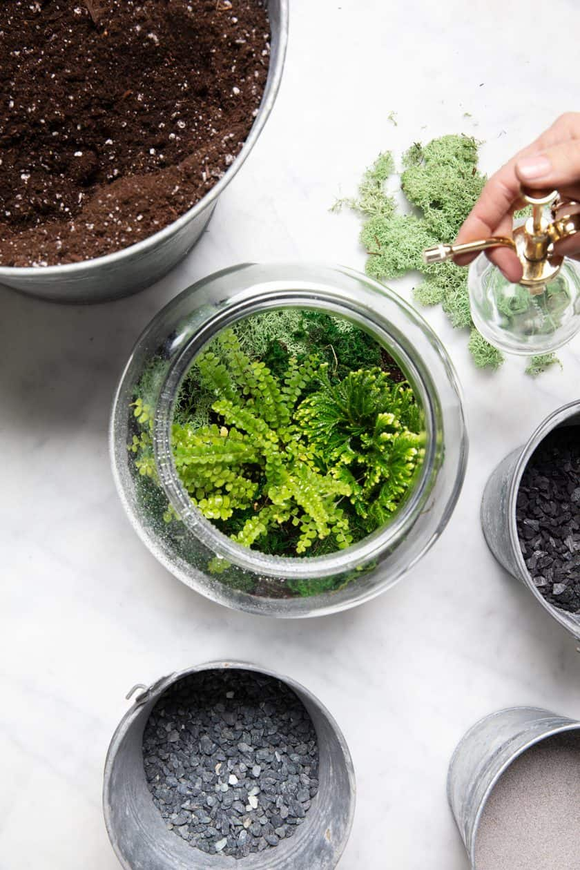 How to Make a Winter Terrarium