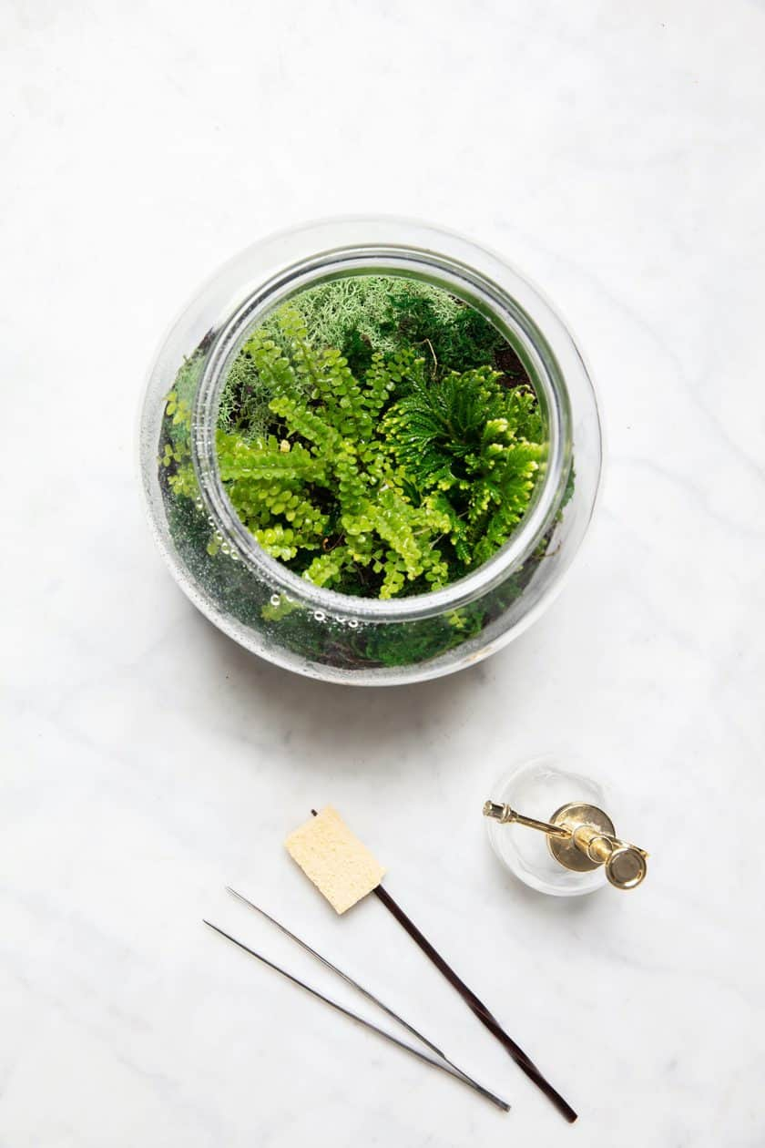simple fern terrarium
