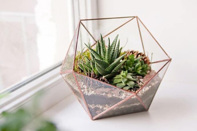 Succulent Winter Terrarium