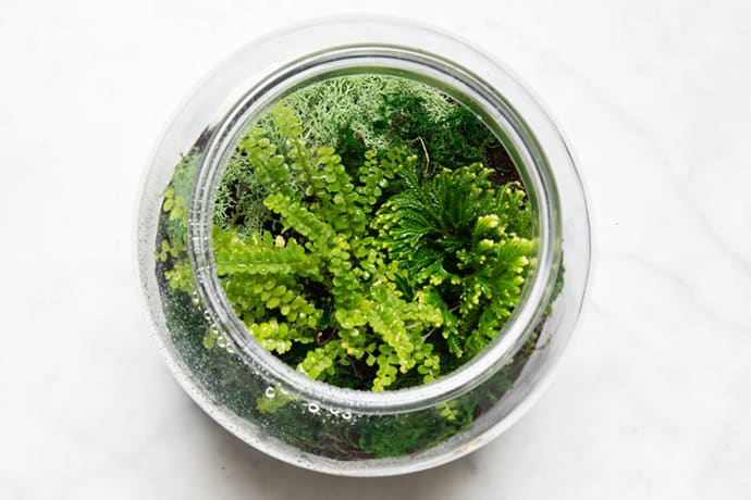 How to Make Winter Terrariums