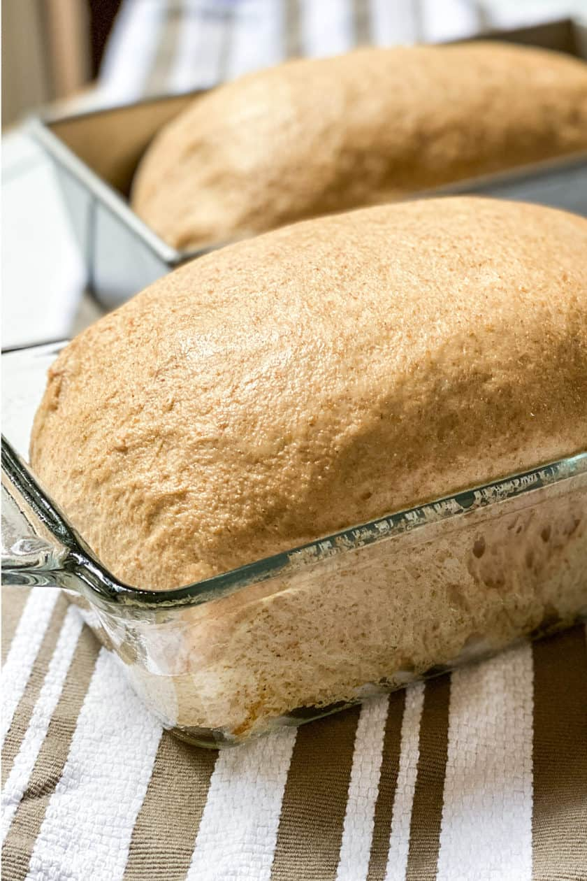 Second Rise of 100% Whole Wheat Bread Recipe: Homemade and Delicious